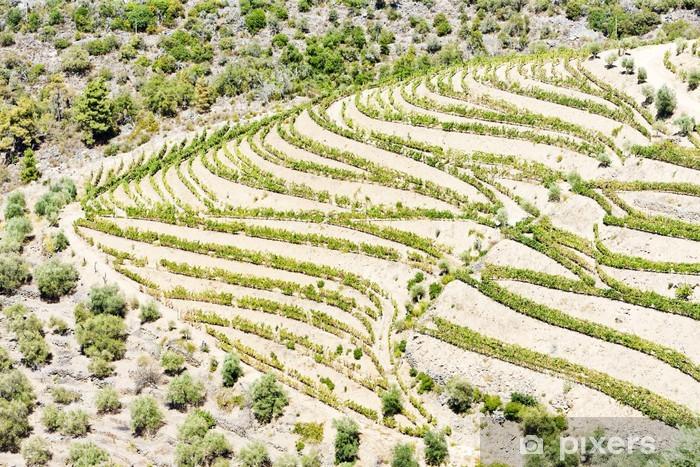 Vinyl Fotobehang Vineyars in Dourovallei, Portugal - Landbouw