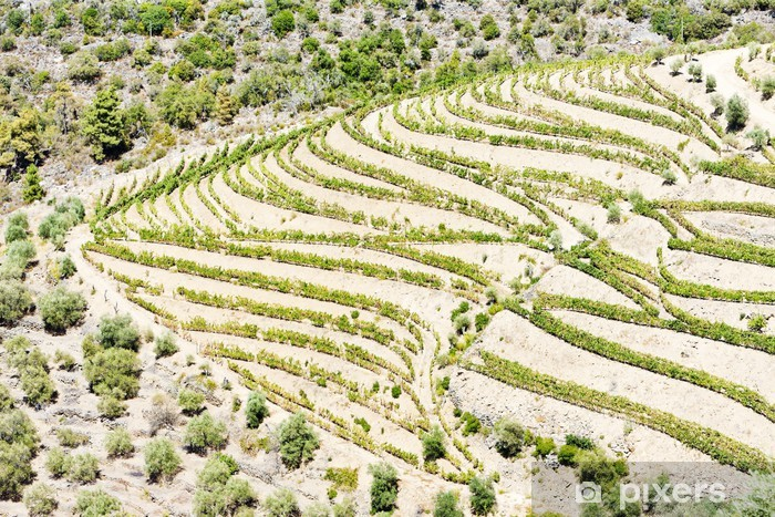 vineyars in Douro Valley, Portugal Vinyl Wall Mural - Agriculture
