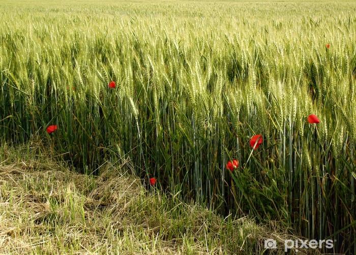 Papier peint vinyle Coquelicots Dans le champ de blé - Europe