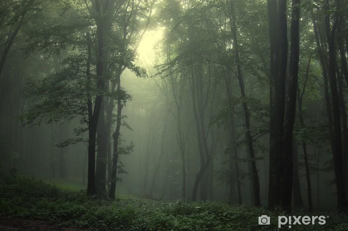 Afwasbaar Fotobehang Groene bos na regen - Stijlen