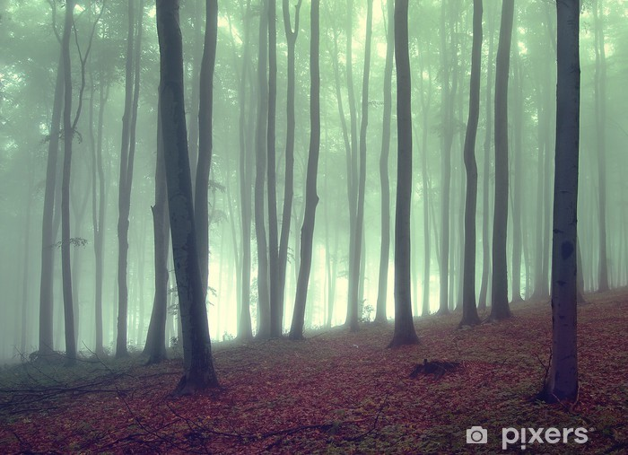 fog in a beautiful forest Self-Adhesive Wall Mural - Themes