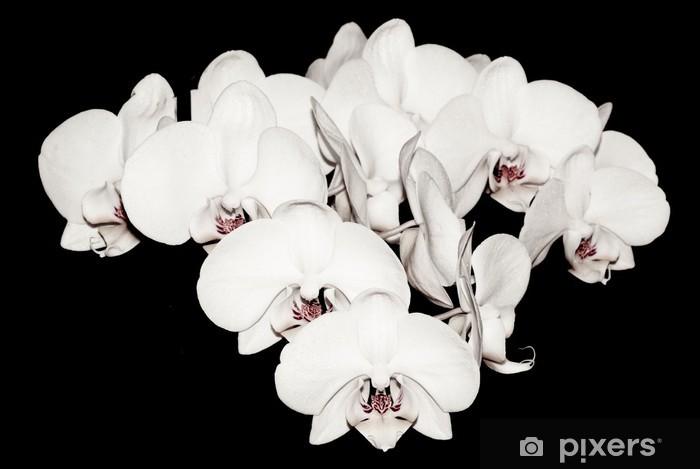 Fototapeta winylowa Białe orchidee samodzielnie na czarny - Tematy