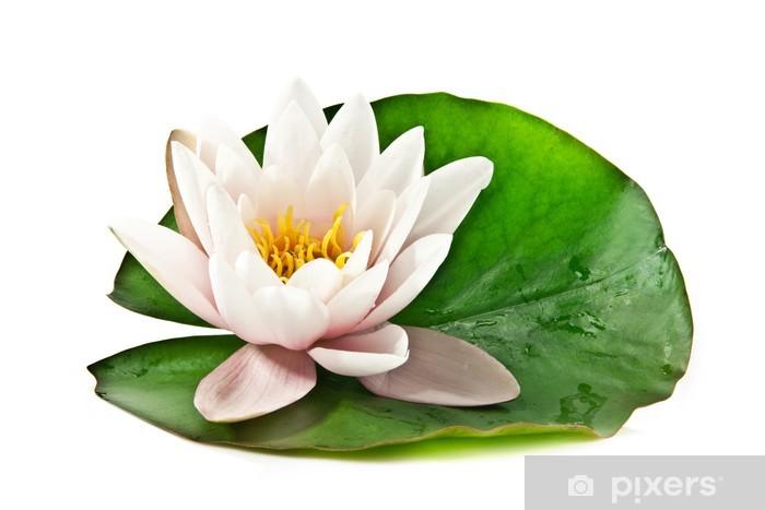 Nálepka Pixerstick Bílá lotus na listu - Životní styl, péče o tělo a krása