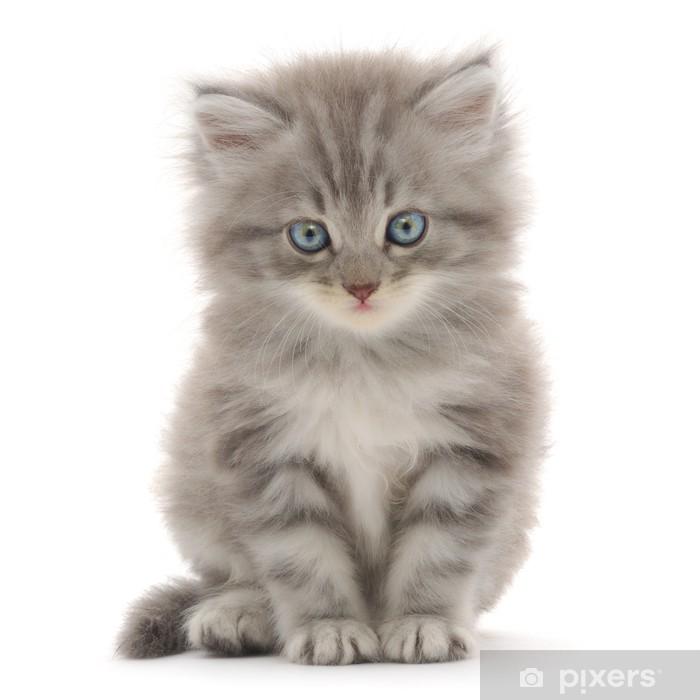 Vinyl Fotobehang Katje op een witte achtergrond - Zoogdieren