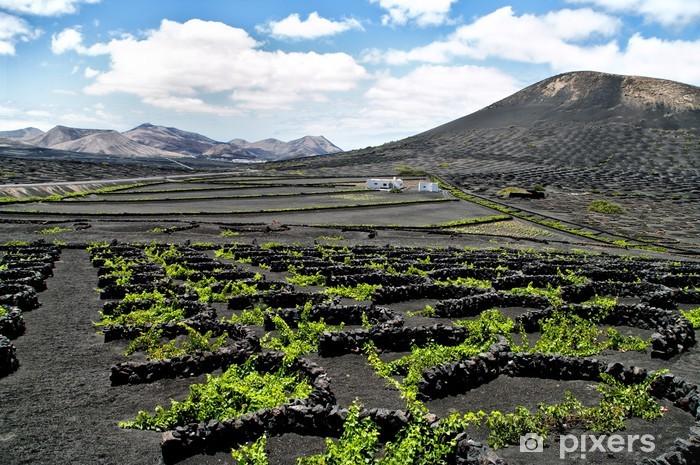 Fototapeta winylowa Winnice w La Geria, Lanzarote, Hiszpania. - Alkohol