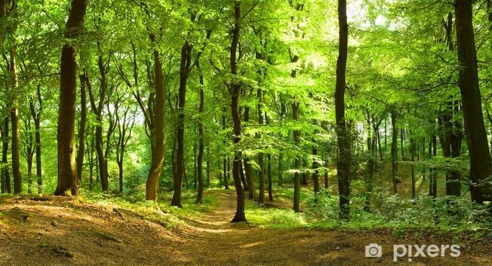 Fototapeta winylowa Las w lecie - Przeznaczenia