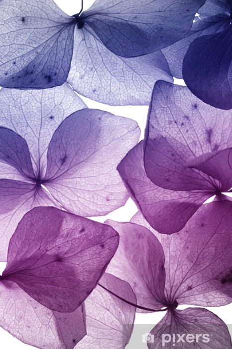 Sticker Pixerstick Coloré pétale de fleur gros plan - Thèmes
