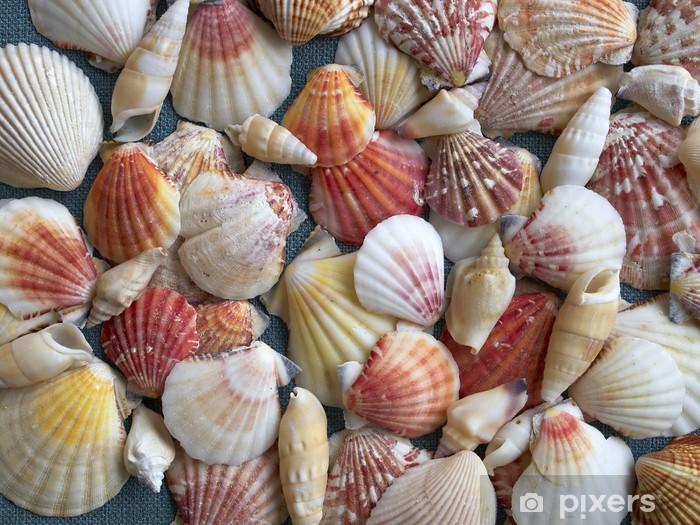 Afwasbaar Fotobehang Verscheidenheid van schelpen, natuurlijke achtergrond - Achtergrond