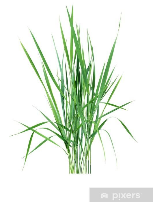 Naklejka Pixerstick Zielona trawa na białym - Rośliny