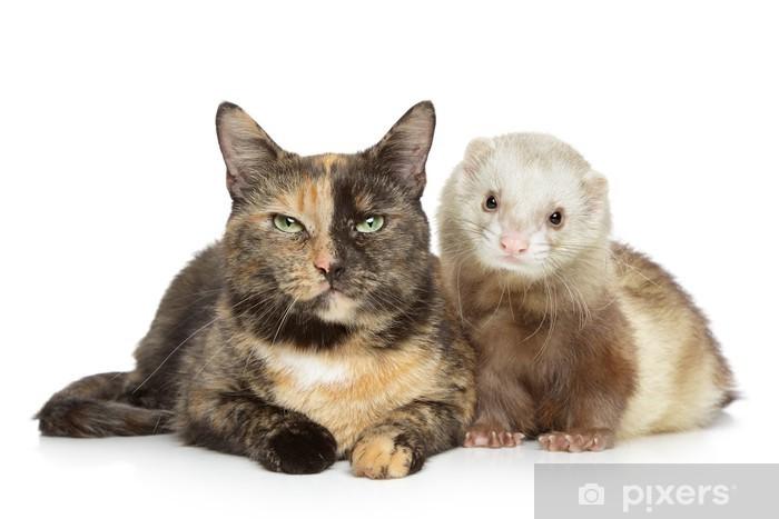 Naklejka Pixerstick Kot i fretki na białym tle - Ssaki