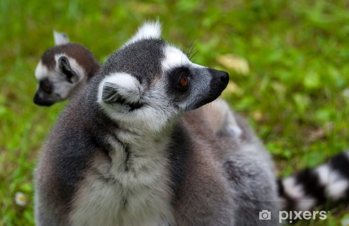Nálepka Pixerstick Lemur rodina - Savci