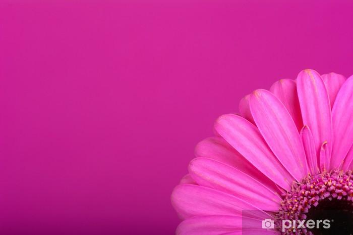Fototapeta winylowa Różowa gerbera na różowym tle - Kwiaty
