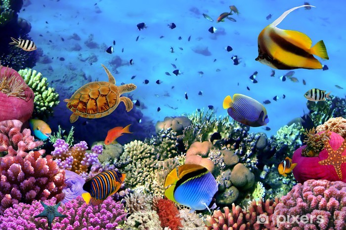 Photo of a coral colony on a reef, Egypt Vinyl Wall Mural - Themes