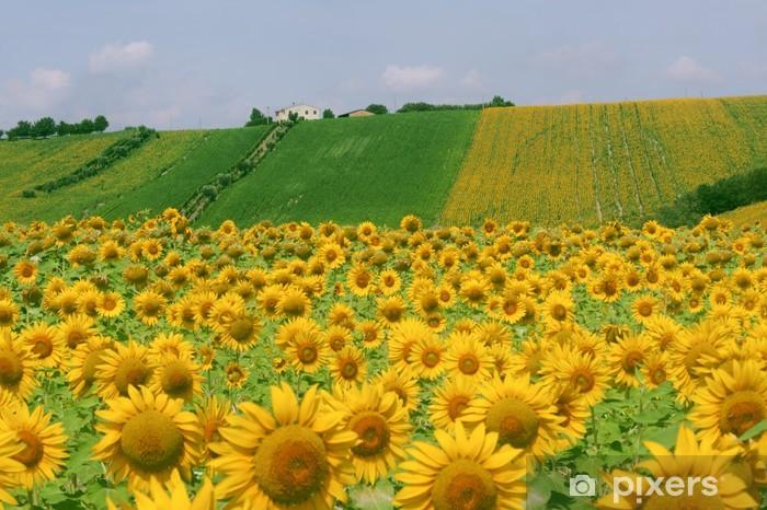 Carta da Parati Marche (Italia) - Paesaggio con girasoli in estate ...