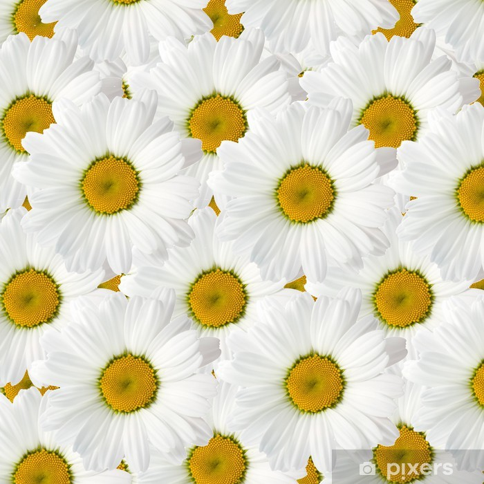 Carta da Parati in Vinile Camomilla con belle foglie bianche - Fiori