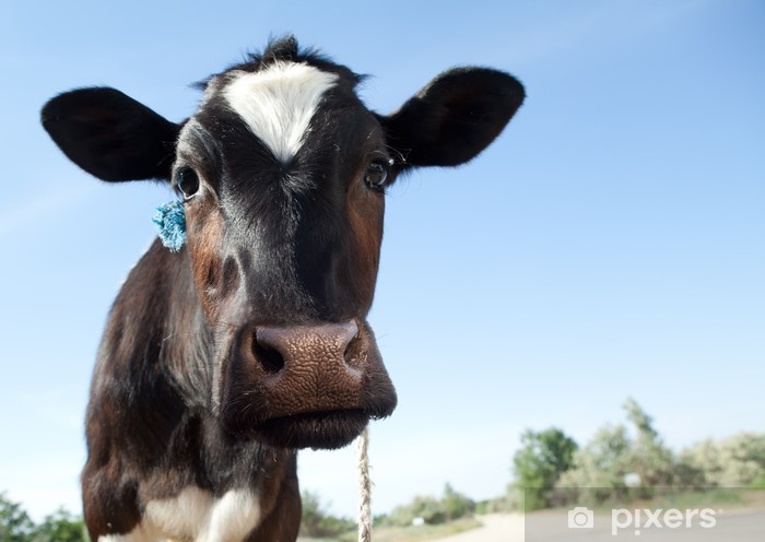 Pixerstick Aufkleber Kühe - Säugetiere