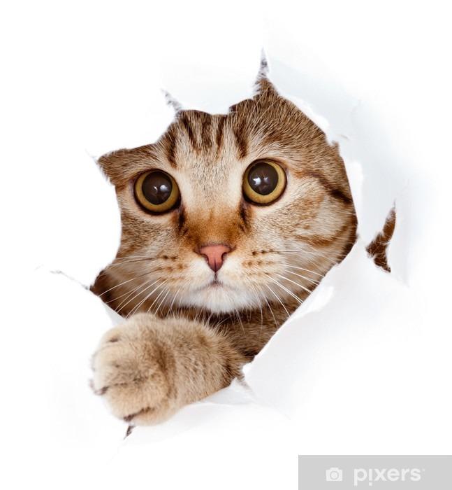 Fotomural Estándar Gato que mira hacia arriba en el lado del papel rasgado agujero aislado - Temas