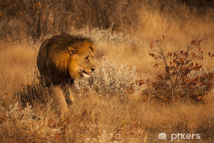 Naklejka Pixerstick Głodny lew - Tematy