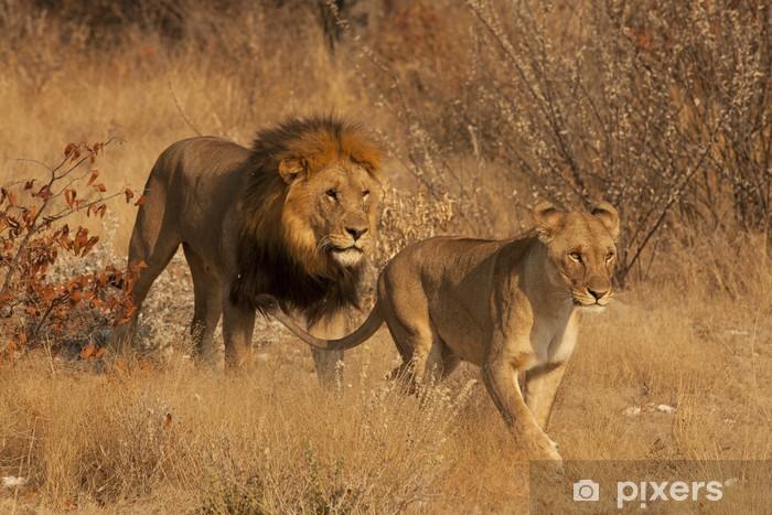 Fototapeta winylowa Para lwów - Tematy