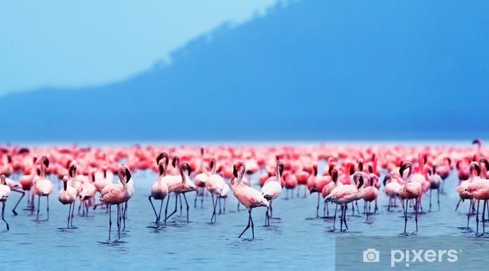 Fototapeta winylowa Flamingi afrykańskie - Tematy