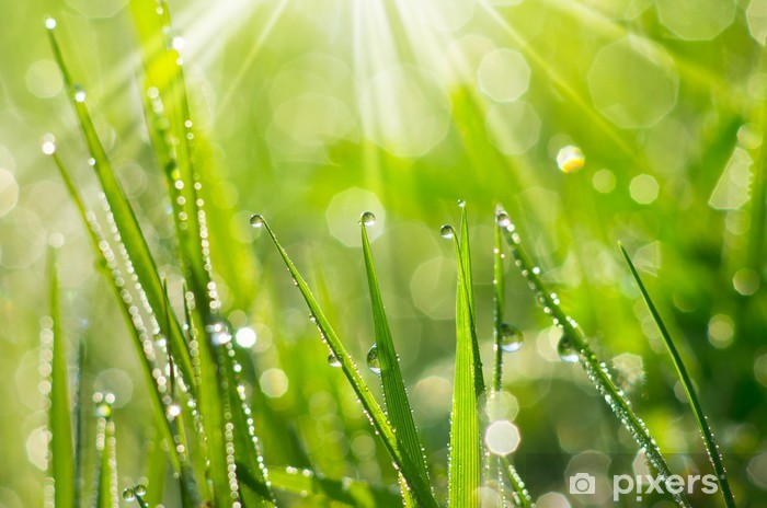 Morning Dew Pixerstick Sticker - Themes