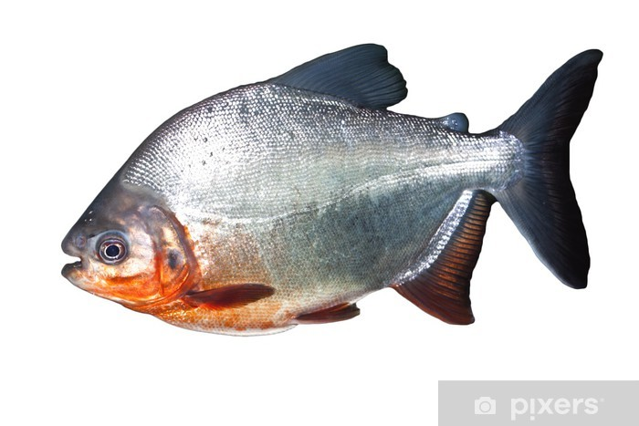 Sticker Pixerstick Piranha - Animaux marins