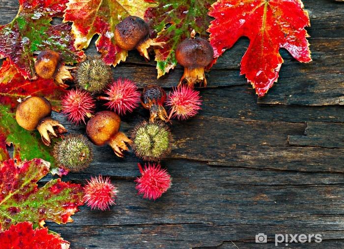 Vinylová fototapeta Barevné mokré podzimní listí a plody uspořádány na svlékl kůry - Vinylová fototapeta