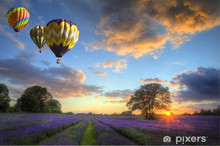 Hot air balloons flying over lavender landscape sunset Vinyl Wall Mural -