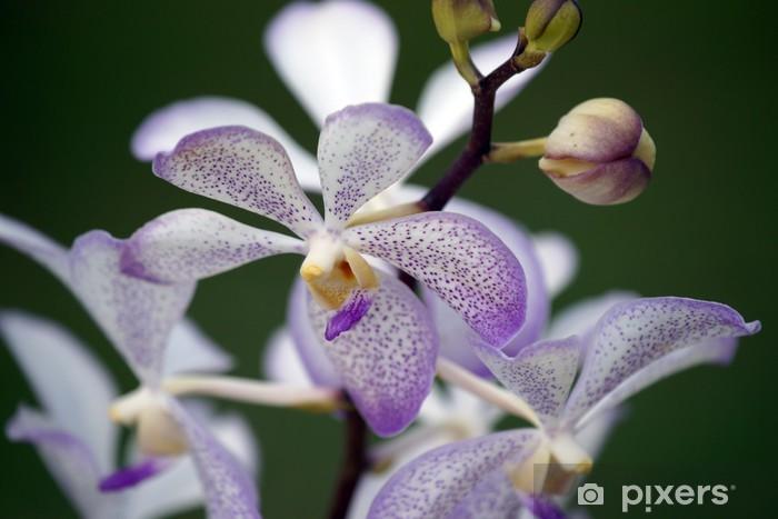 Nálepka Pixerstick Paradise motýli. Orchideje Borneo. - Venkov