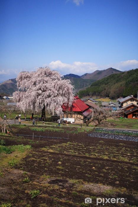 Naklejka Pixerstick Kraj płaczącej wiśniowe drzewo - Inne pejzaże