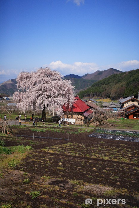 Papier peint vinyle 田 舎 の し だ れ 桜 - Autres