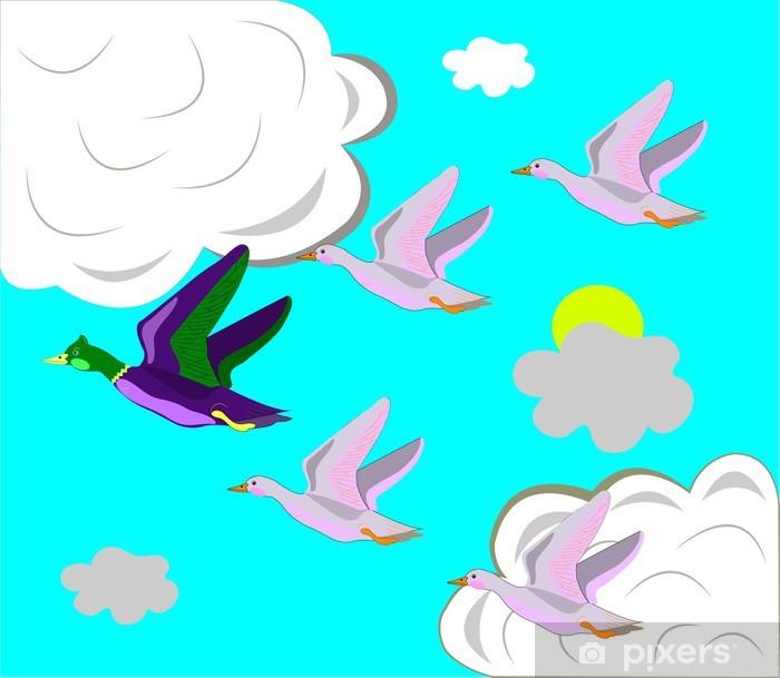 Fototapeta winylowa Kaczki latać na południe. - Ptaki