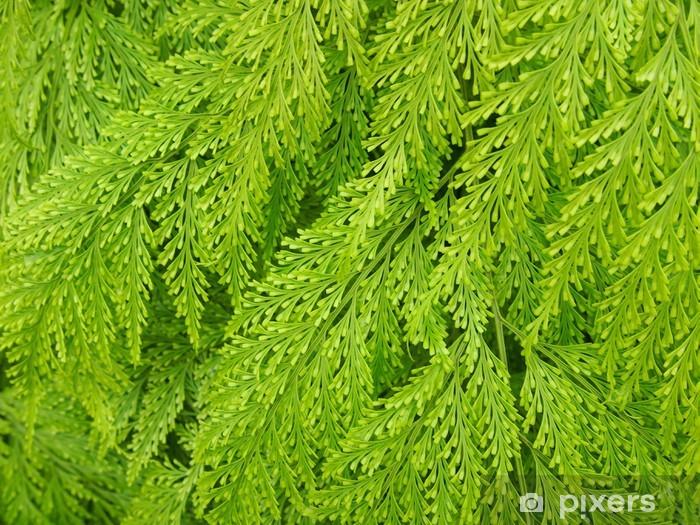 Naklejka Pixerstick Liście paproci - Rośliny