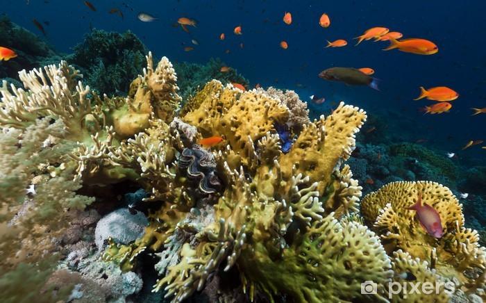 Naklejka Pixerstick Tropical podwodnego życia w Morzu Czerwonym. -