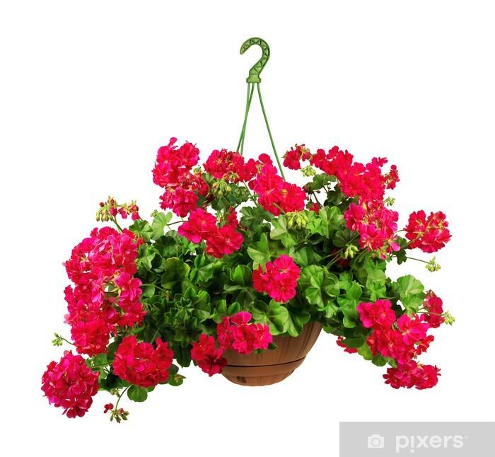 Plakat Zawieszenie geranium - Dom i ogród