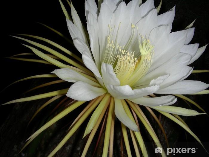 Naklejka Pixerstick Cereus. - Kwiaty