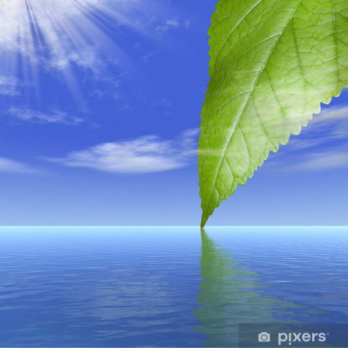 Reflection of a leaf of a tree behind clouds in water Vinyl Wall Mural - Skies