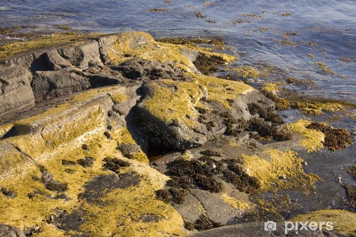 Naklejka Pixerstick Algi i wodorosty w Norwegii - Europa