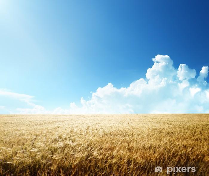 field of barley and sunny day Pixerstick Sticker - Seasons