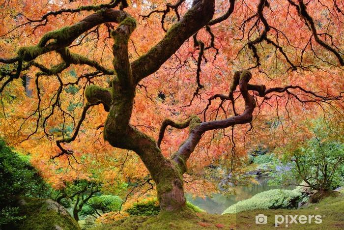 Papier peint vinyle Vieil arbre d'érable japonais à l'automne - Automne