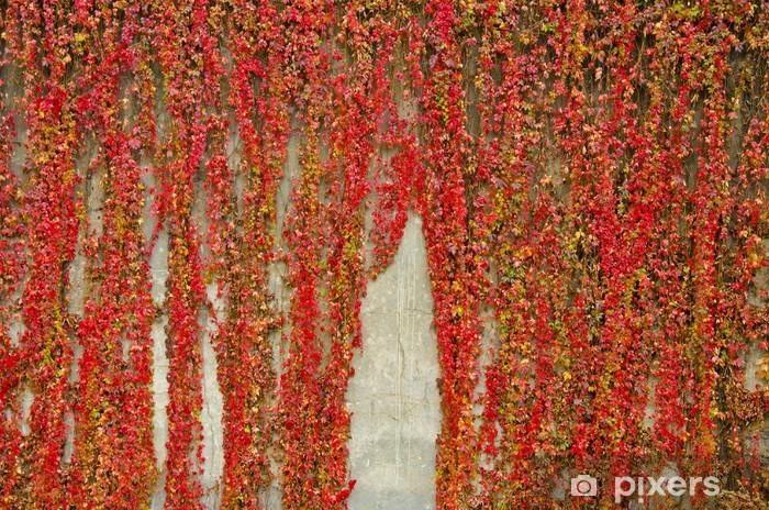 Fotomural Autoadhesivo Enredaderas de colores cubre la pared de hormigón. Los colores del otoño. - Estaciones