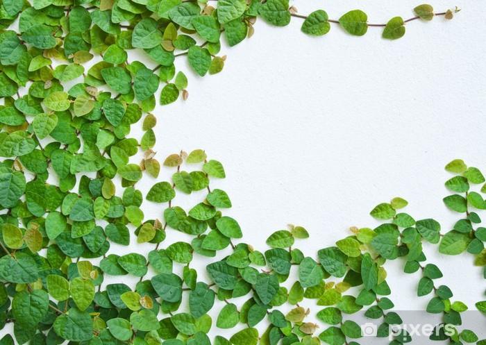 papier peint la plante verte plante grimpante sur le mur. Black Bedroom Furniture Sets. Home Design Ideas