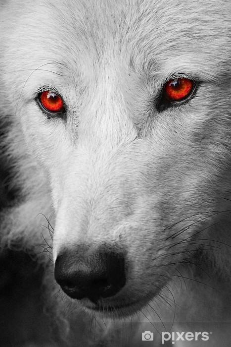 Fototapeta winylowa Biały wilk - Husky