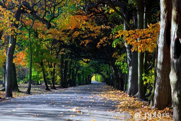Vinyl-Fototapete Alley mit fallenden Blättern im Herbst Park - Themen