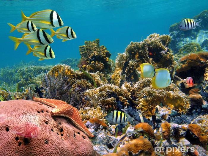 Fotomural Estándar Submarinas - Pescados