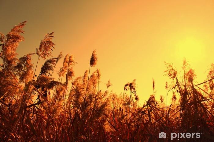 Vinylová fototapeta Ostřice v oranžové nebe a slunce - Vinylová fototapeta