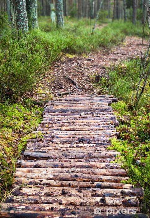 Fototapeta winylowa Chodnik lidera w lesie sosnowym - Pory roku
