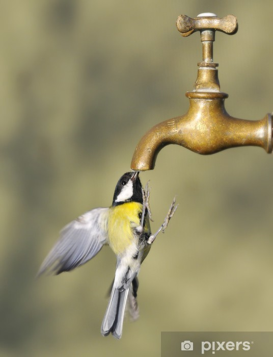 Sticker Pixerstick Potable vol d'oiseau à partir d'un robinet - Oiseaux