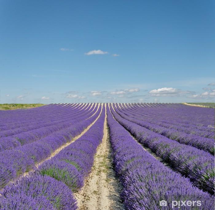 Plakát Krajina v Provence - Zemědělství