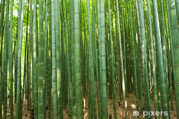 Papier peint vinyle Bambou foret - Thèmes
